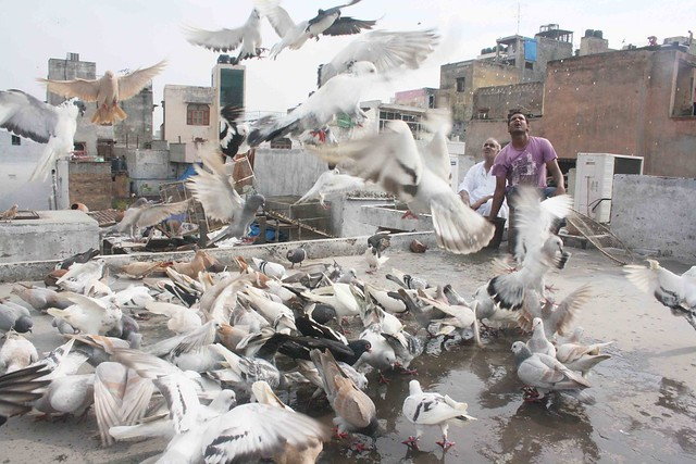 City Life – Bird Flying, Matia Mahal