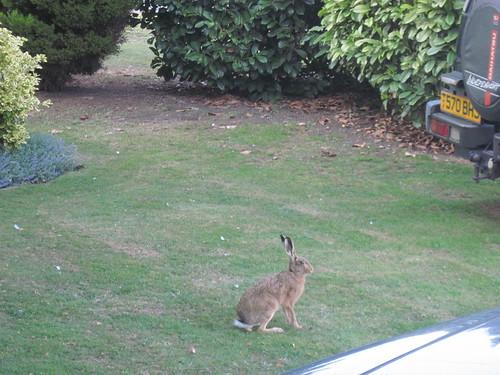 Hares In The Garden