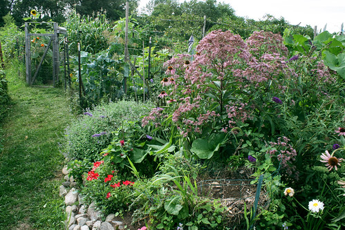 Judy's butterfly garden