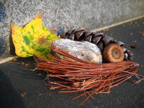 nature still life #2