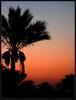 Sunrise at Hurghada, Egypt (Saf') Tags: silhouette sunrise dawn egypt middleeast palmtrees hurghada palmiers egypte مصر saf laube البحر moyenorient leverdusoleil makadibay محافظة الغردقة الأحمر alghardaqah الشرقالأوسط redseagovernorate panasoniclumixdmcfz28 safiaosman tiaheightsmakadibayhotel tiaheightsmakadibayresort baiedemakadi sunriseathurghada