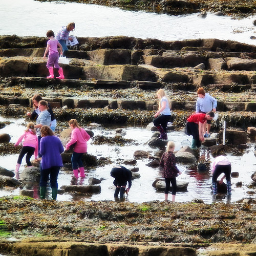 rockpool survey by moclaydon