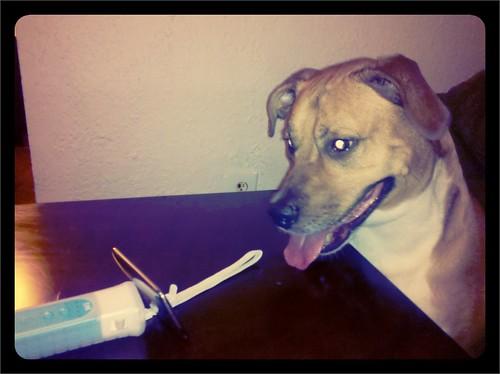 iPod = dog sitter