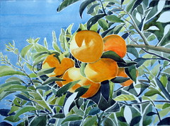 Citrus, Finished (Dona Minúcia) Tags: plant tree planta art nature fruit watercolor painting paper fruta study citrus homage árvore homenagem aquarela cítrico fláviovalsani