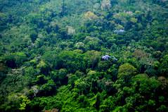 Amazon basin (mothclark62) Tags: peru southamerica rain forest amazon rainforest jungle peruvian amazonia southamerican amazonbasin amazonforest