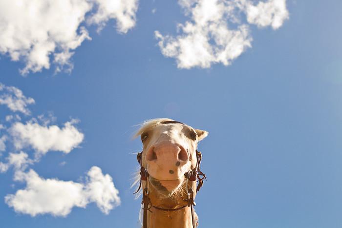 Halifax NS Wedding Portrait Horse Equine photography - Splash & Donna - Nicole Payzant -  (17 of 26)