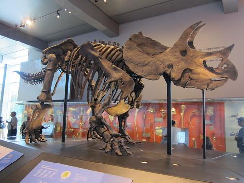 Triceratops!