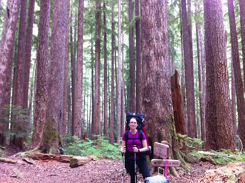 Junction: Appleton Pass Trail & Sol Duc River Trail