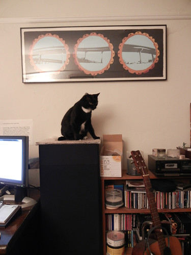 Cat Won _ 4687_500