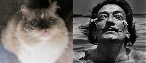 Tyco+and+Mr.+Dali