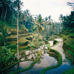 (laura tj) Tags: bali film indonesia lomo lomography analogue padi ricefield ubud sawah paddyterrace dianamini
