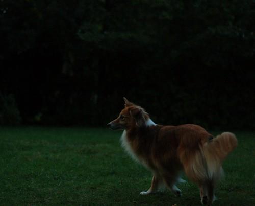 still foxy