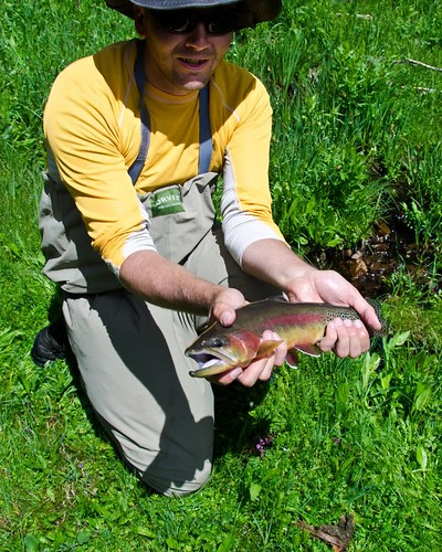 Golden Trout in CO 5