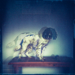 dog with apples (jessthespringer) Tags: ireland dog 120 film home photoshop mediumformat table thankyou 4x4 toycamera lofi double diana jess apples analogue dianaf innit englishspringerspaniel kodakportra dohickey textute thelittledoglaughed leschick jessthespringer discoveryourinnerlomochav