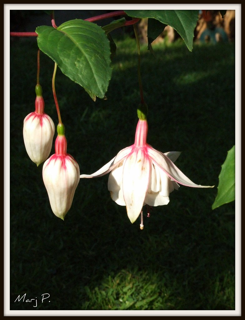 Fuschia - 'Happy wedding day'.