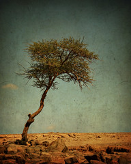 Limited shrubbery (Jon's snaps) Tags: world summer tree sahara photoshop canon vintage bush sand rocks alone desert morocco heat lone lonely withered limited processed isolated shrubbery trekker twtme xti 400d