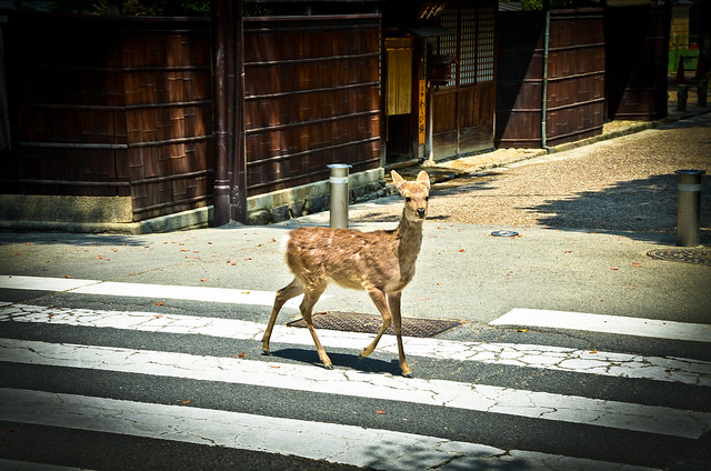 why did the deer cross the road?