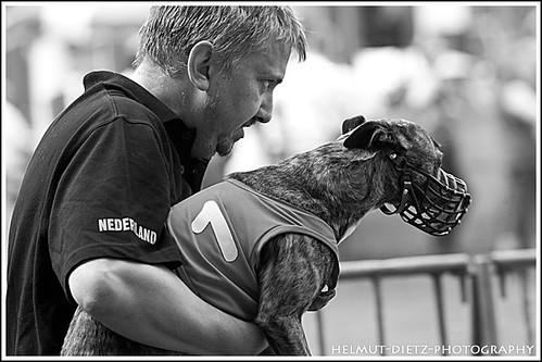 FCI Greyhound European Championship 2011, Beringen, Belgium