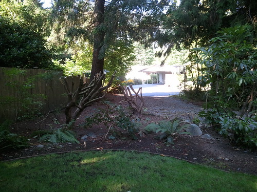 Serious rhododendron pruning
