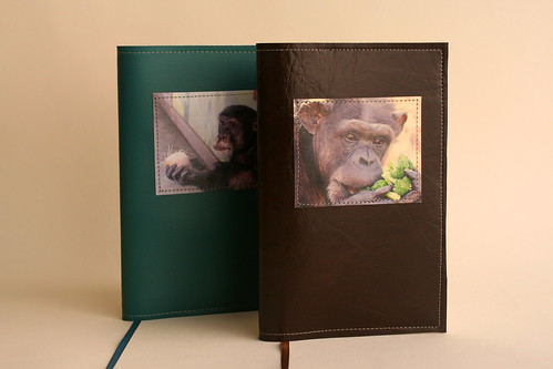 Chimp Notebooks