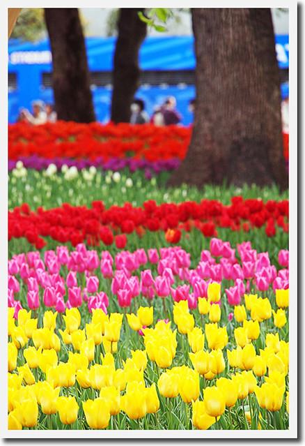110417_145456_横浜_花と緑のスプリングフェア2011