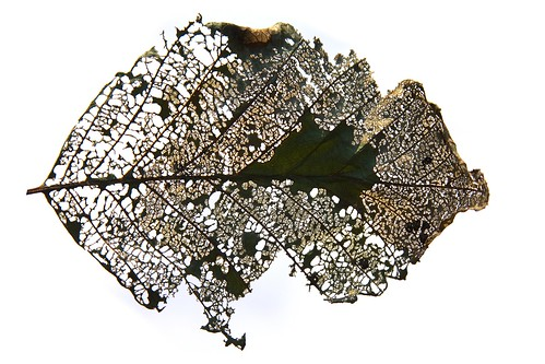 The hidden architecture of a leaf by The Bacher Family