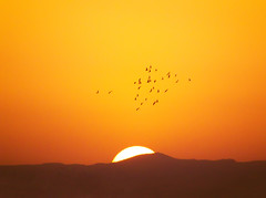 Sunset (Mohammad Sh.) Tags: sunset summer orange sun birds day iran clear mount  qazvin     iranmap iranmapcom