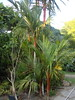 DSC02704 (rantavani) Tags: plantas tropicais