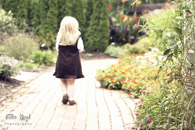 Rowan-in-garden
