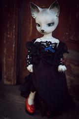 Apple (koroa) Tags: cat doll skin charlotte gray bjd abjd pipos
