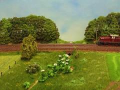 PICT9550b (dampflok44) Tags: modelleisenbahn modelrailroad modellbau modellbahn riesenbärenklau modelllandschaft modulanlage