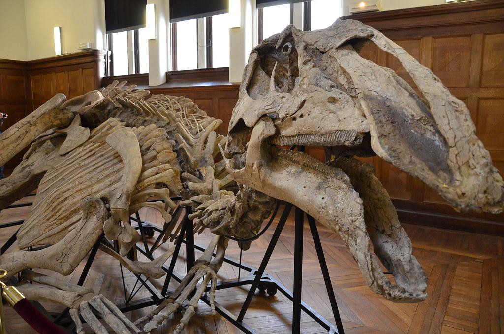 Prosaurolophus maximus - Tête et corps