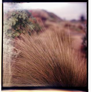 Grassy Tuft