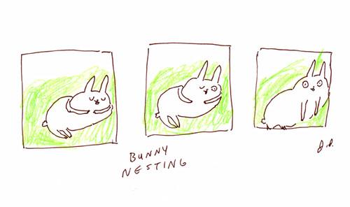 bunny nesting