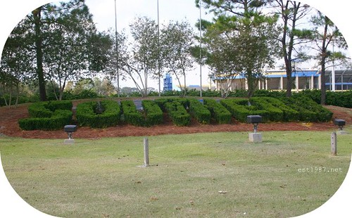 BR_SouthernU_bushes