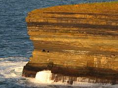 sea cliffs (hmb52) Tags: ireland stone landscape sheep atlantic coastal mayo geology ceidefields seacliffs ballycastle northmayo