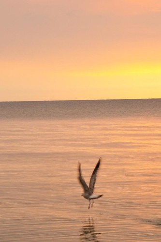 Sunrise with the seagull