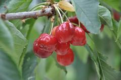 Guhyaloka flora 9b