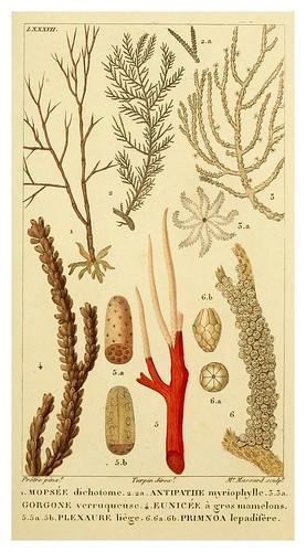 019-Manuel d'actinologie ou de zoophytologie (Volume plates) 1834- H.-M. Ducrotay Blainville