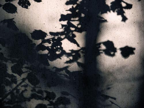Schattenspiele by Fotosilber