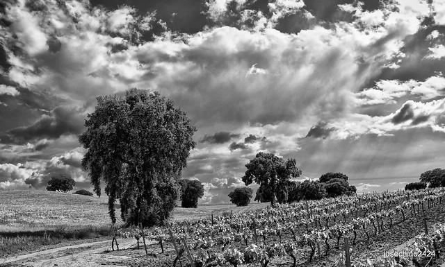 Esplendor en los viñedos.