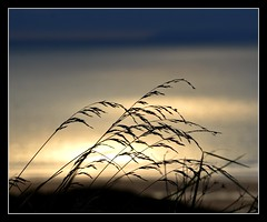 There are only two times that I want to be with you Now and Forever. (Levels Nature) Tags: uk light sea england holiday macro reflection nature grass silhouette reflections devon grasses woolacombe northdevon mygearandme blinkagain