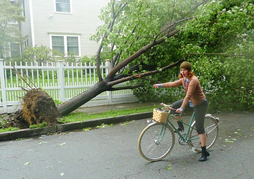 Irene, Toppled Tree