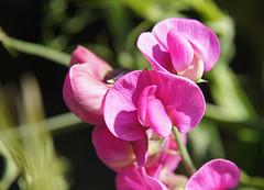 2011-08-13 Kalifornien, Pazifikküste 055 Ano Nuevo State Reserve