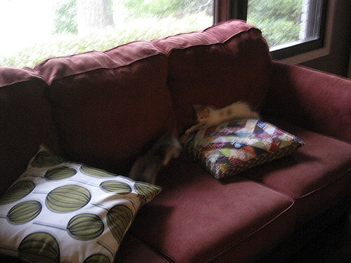 good use of cushions...