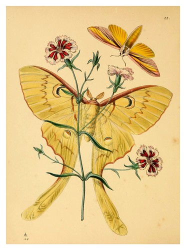 010- The cabinet of oriental entomology…1848- John Obadiah Westwood