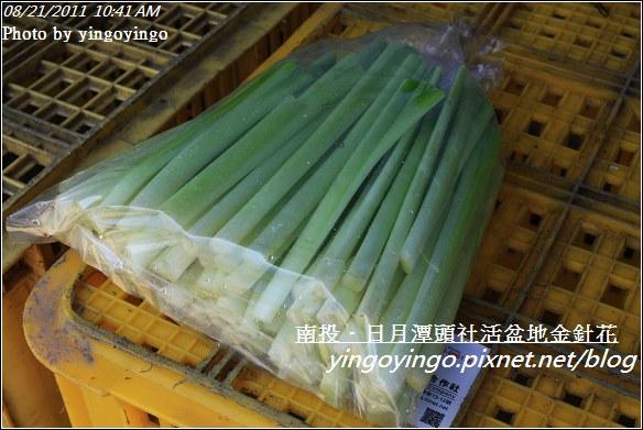 南投魚池_頭社活盆地金針花20110821_I1297
