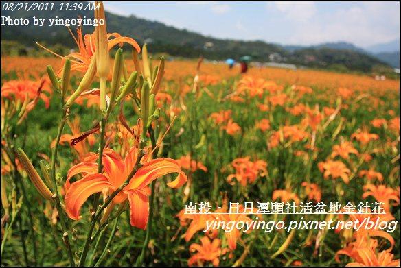 南投魚池_頭社活盆地金針花20110821_I1330