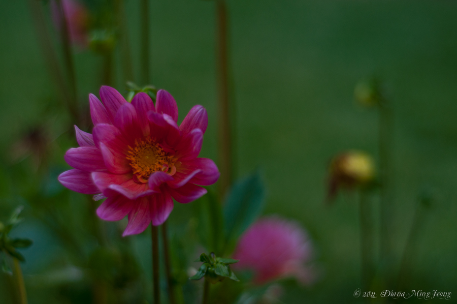 Descanso Flowers