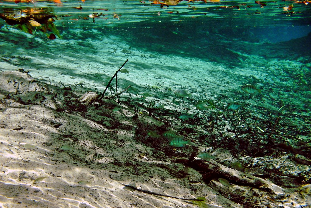 Gainer Spring: Econfina Creek Canoe Trail